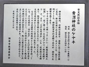090921-22青渭神社の大ケヤキ解説.JPG