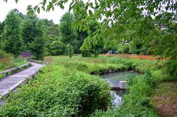 090921-29水生植物園-2.JPG