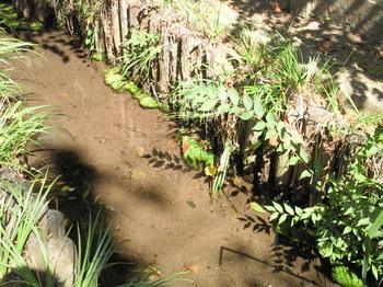 20100829藻のようなもの-1.jpg