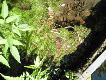 20100829藻のようなもの-3.jpg