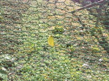 20101212黄色いちょうちょ000.jpg