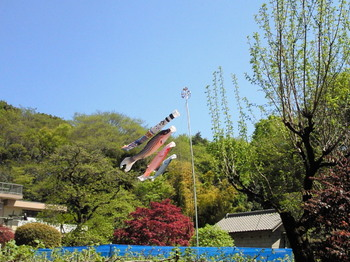 20110424ハケ下民家のこいのぼり.jpg
