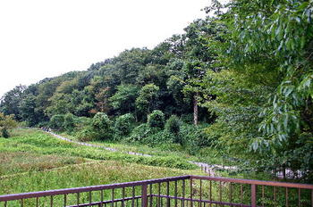 090921-28水生植物園-1.JPG