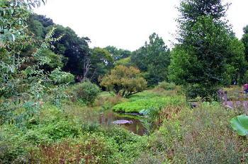090921-30水生植物園-3.JPG