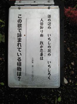 20100925彼岸花万葉集-1.jpg