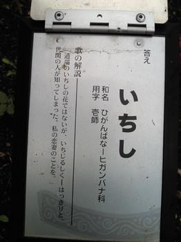 20100925彼岸花万葉集-2.jpg