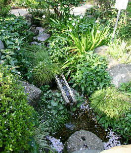 植物園湧水石樋.JPG